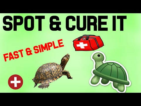 How to fix shell rot, injuries, and fungal infections in