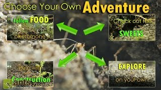 Choose Your Own Adventure: A DAY IN THE LIFE OF AN ANT (Interactive)