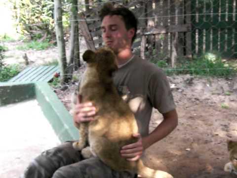 מכל הלב: גורי אריות מפגינים אהבה!