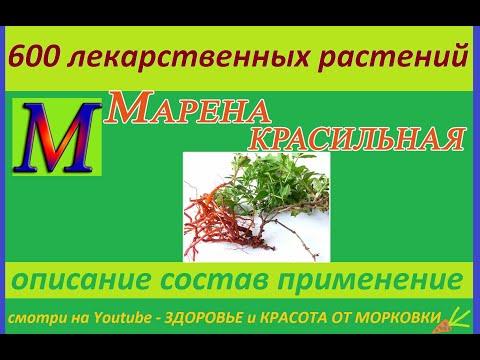 МАРЕНА КРАСИЛЬНАЯ 600 лекарственных растений