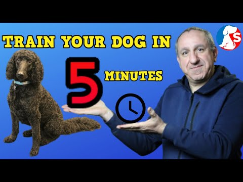 TRAIN YOUR DOG IN 5 MINUTES - Online dog training courses ...