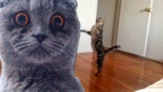"Epic Funny Cats - Compilation Part Two ""The Cat Strikes Back!"""