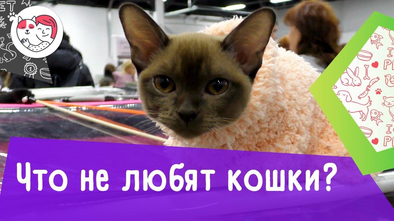 5 человеческих поступков, которые кошки терпеть не могут