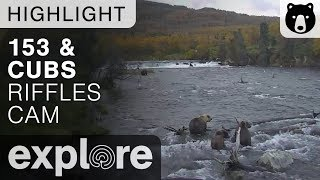 Bear 153 and Cubs - Katmai National Park - Live Cam Highlight