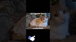 Видео про 🐈