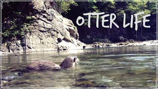 Otter Aty, Mr.Cat and our camping life 【カワウソアティとにゃん先輩】