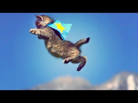 CUTE KITTENS FLY IN SLOW MOTION! // ScottDW