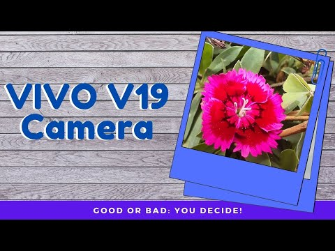 Vivo V19: Camera Preview