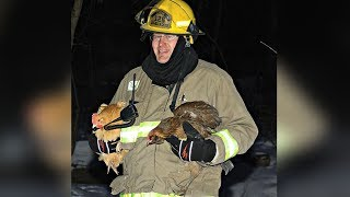 Body Cam Video Shows Firefighter's Harrowing Chicken Rescue