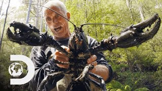 Jeremy Wade Finds Giant Crayfish   Jeremy Wade's Dark Waters