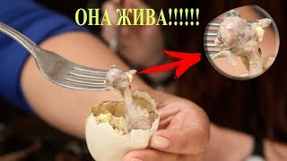 Это яйцо чуть не съели, но женщина спасла его. Только посмотрите кто из него вылупился!!!