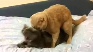 Кот не в ту дырку сунул18+