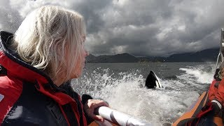 Vancouver Island - Whalewatching 4k