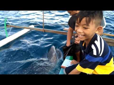 Video Wisata ikan hiu paus Gorontalo
