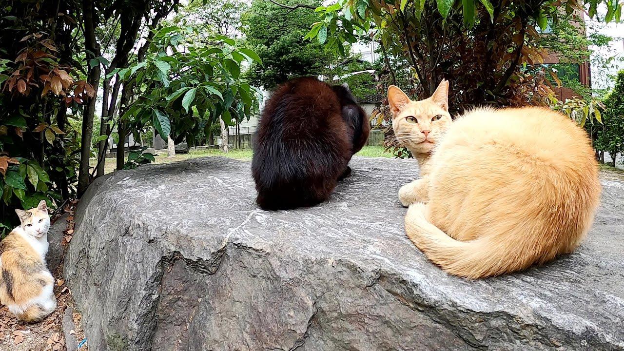 無防備に眠る茶トラ猫の側で、怖がりな猫達がコチラを警戒していた