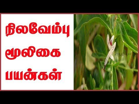 Nilavembu   Nilavembu Benefits   Nilavembu in Tamil   Nilavembu Kudineer   நிலவேம்பு