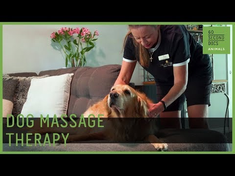 Professional Massage Therapy For Dogs - YouTube