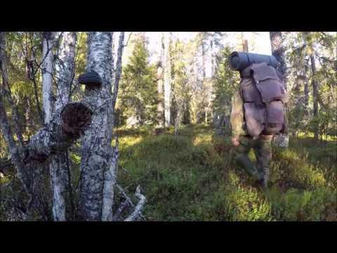 Koirat Metsällä -Pystykorvat