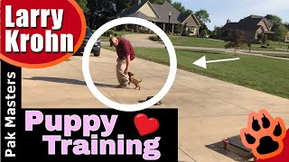 How to TRAIN a 8 week old puppy - Puppy Training