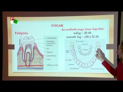 férgek vs parazita féreg pinwormák kezelésére szolgáló kezelés