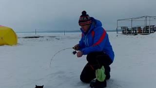 Отчеты о рыбалке на шарташе