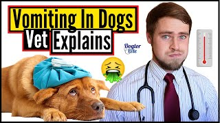 How To Care For A Dog Throwing Up? | Types Of Dog Vomit And What They Mean | Veterinarian Explains