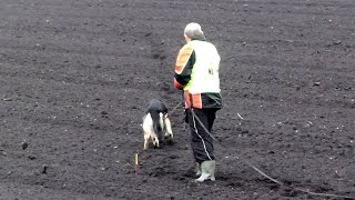 FCI World Championship for Tracking Dogs 2015