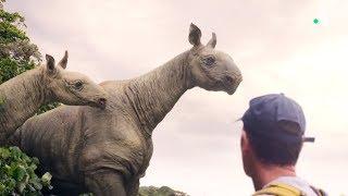 Baluchithère : le géant disparu - ZAPPING SAUVAGE