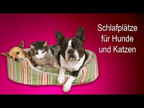 Welcher Schlafplatz für Hund & Katze? Tipps von Claudia Ludwig!