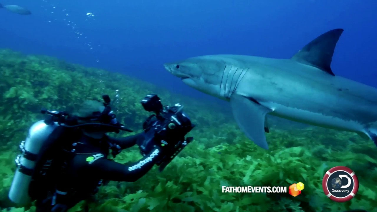 Discovery's Shark Week at the Movies - Studying Great Whites | Return to the Isle of Jaws