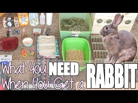 , title : 'What You Need When You Get A Rabbit