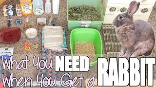 What You Need When You Get A Rabbit