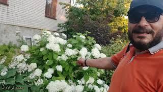 اغاني حصرية شوف خير بيتى مشمش وتفاح وكمثرى ماشاء الله فى اوكرانيا تحميل MP3