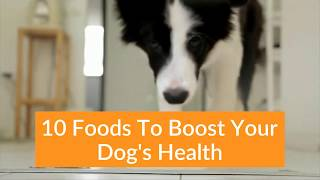 10 Foods To Fight Disease In Dogs  | Boost Your Dog's Immune System