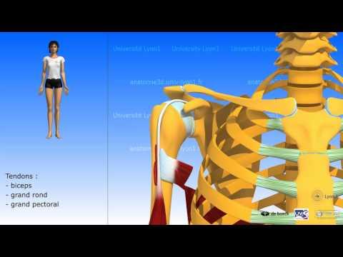Les exercices pour un grand muscle fessier de lhomme
