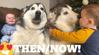 The Amazing 2 Year Story Of My Baby & Husky Becoming Best Friends! [UNSEEN CLIPS]