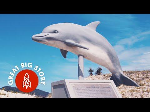 How Dolphins Help Brazilian Fishermen