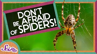 Don't Be Afraid of Spiders