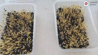 Влияние WIFi на всхожесть семян