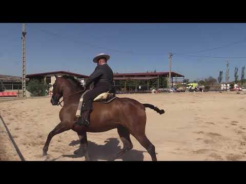 Equitación de Trabajo 280821 Video Doma 2