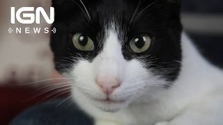 Cat Sets World Record for Loudest Purr - IGN News