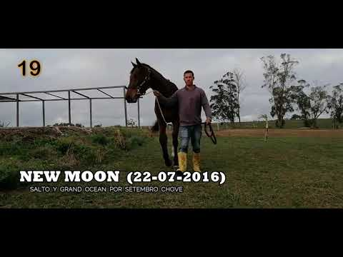 Lote NEW MOON (BRZ)