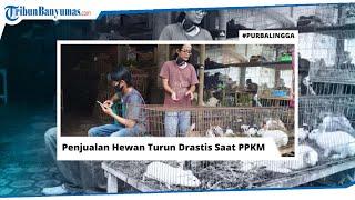 PPKM di Pasar Hewan Purbalingga Bikin Pedagang Sambat, Penjualan Kelinci Anjlok 70 Persen