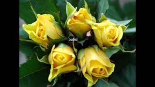 Mark Ashley King of Roses