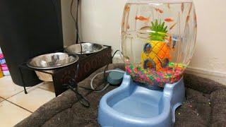 DOG BOWL Fish AQUARIUM! DIY