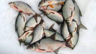 Как приготовить прикормку для зимней рыбалки
