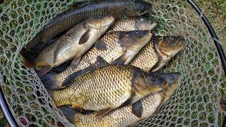Рыбалка что такое макушатник для карпа