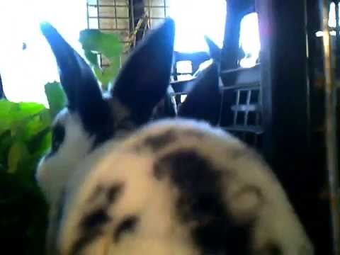 Кролики - рексы