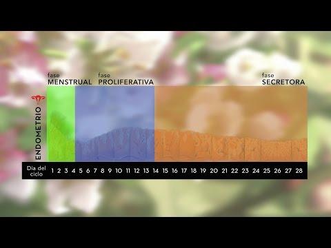 Transferencia de embriones en ciclo natural