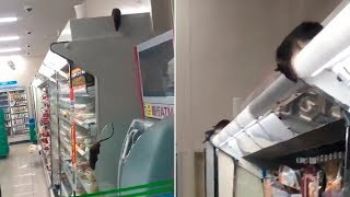 video: Japanese chain FamilyMart apologises as video of rats in shop goes viral